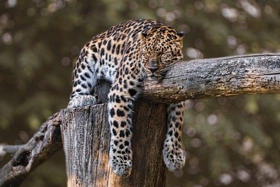 Sleeping Easy in Retirement